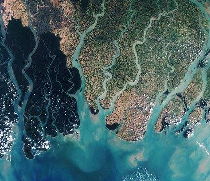 Sundarbans 1